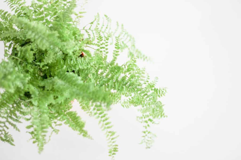 close up fern leaves plant 322342
