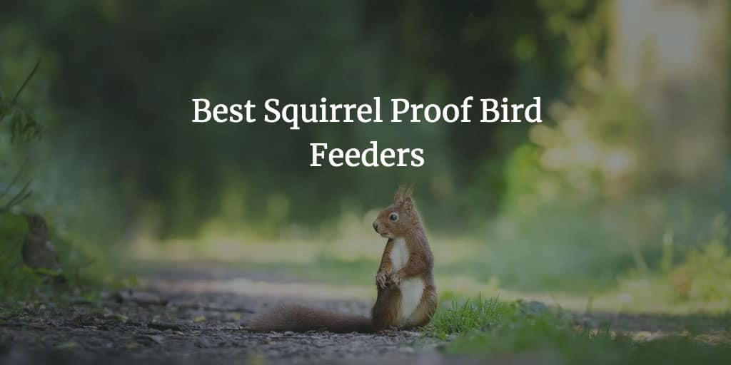 The Best Squirrel Proof Bird Feeders