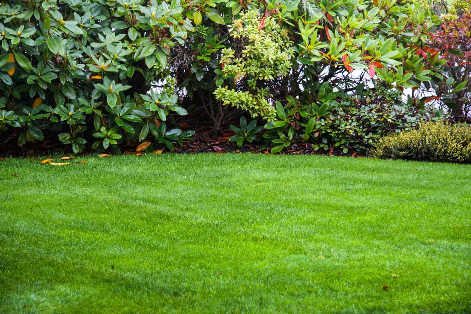 Top Dressing Lawn