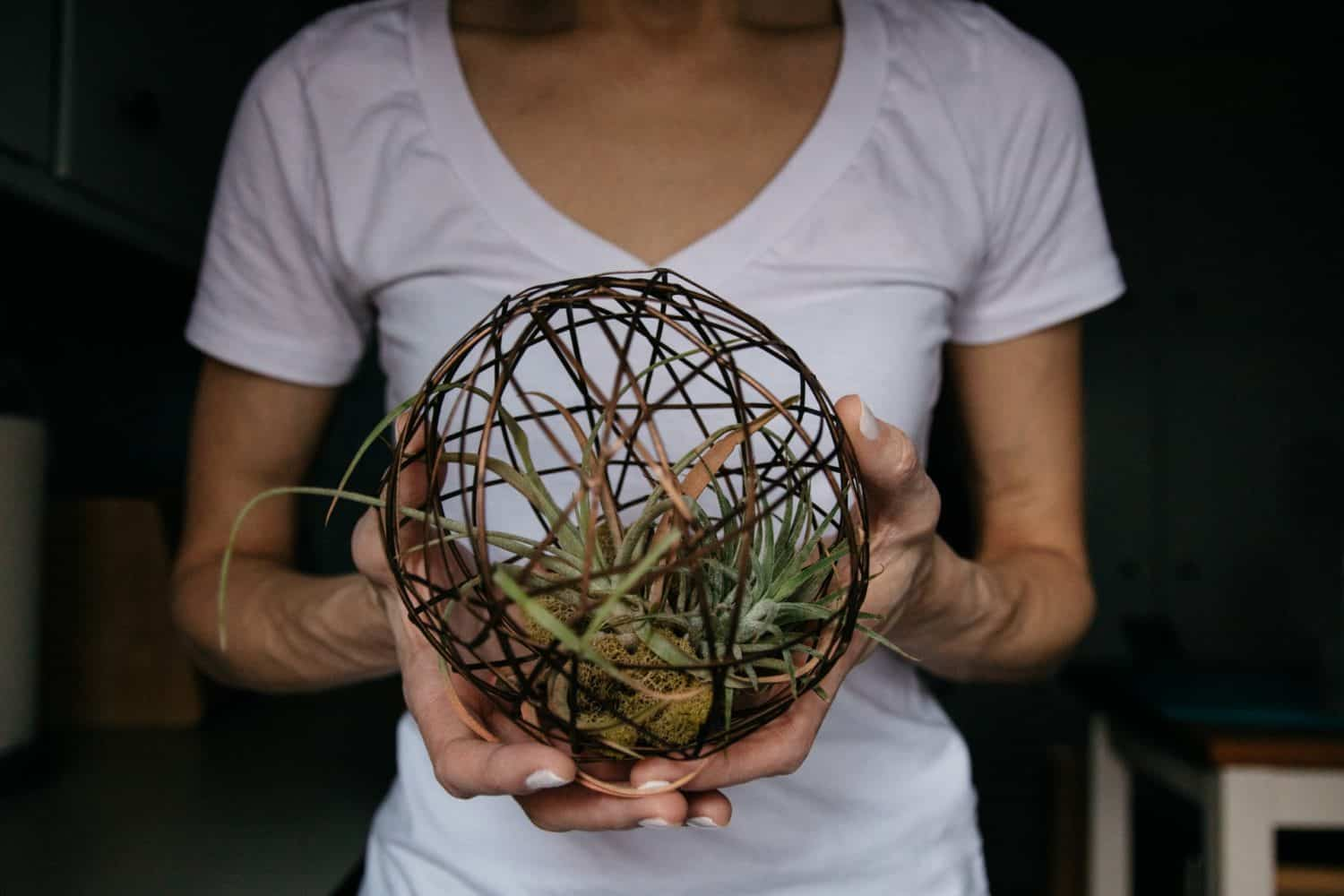 woman holding air plant