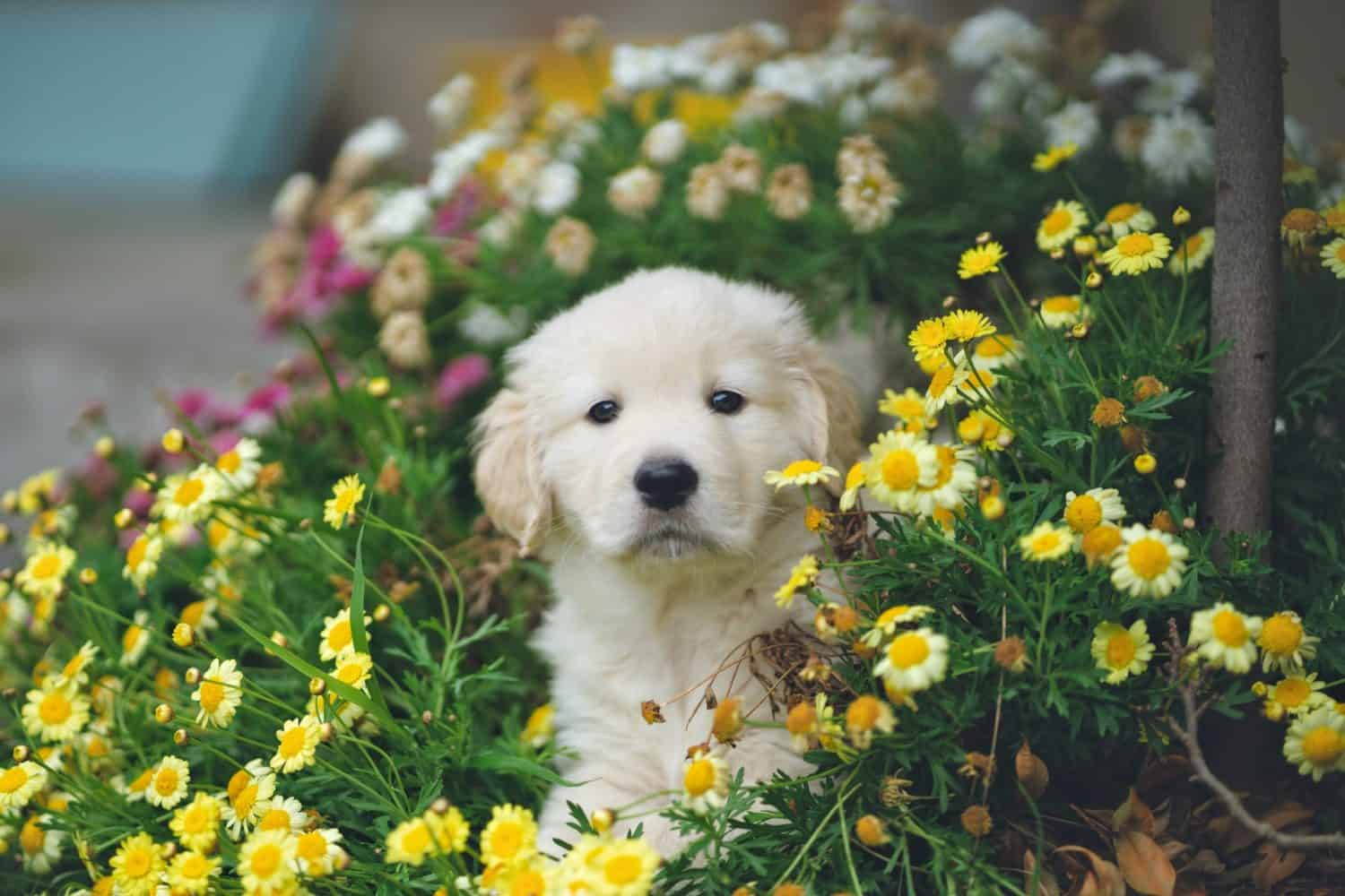 puppy surrounded by yellow flowers