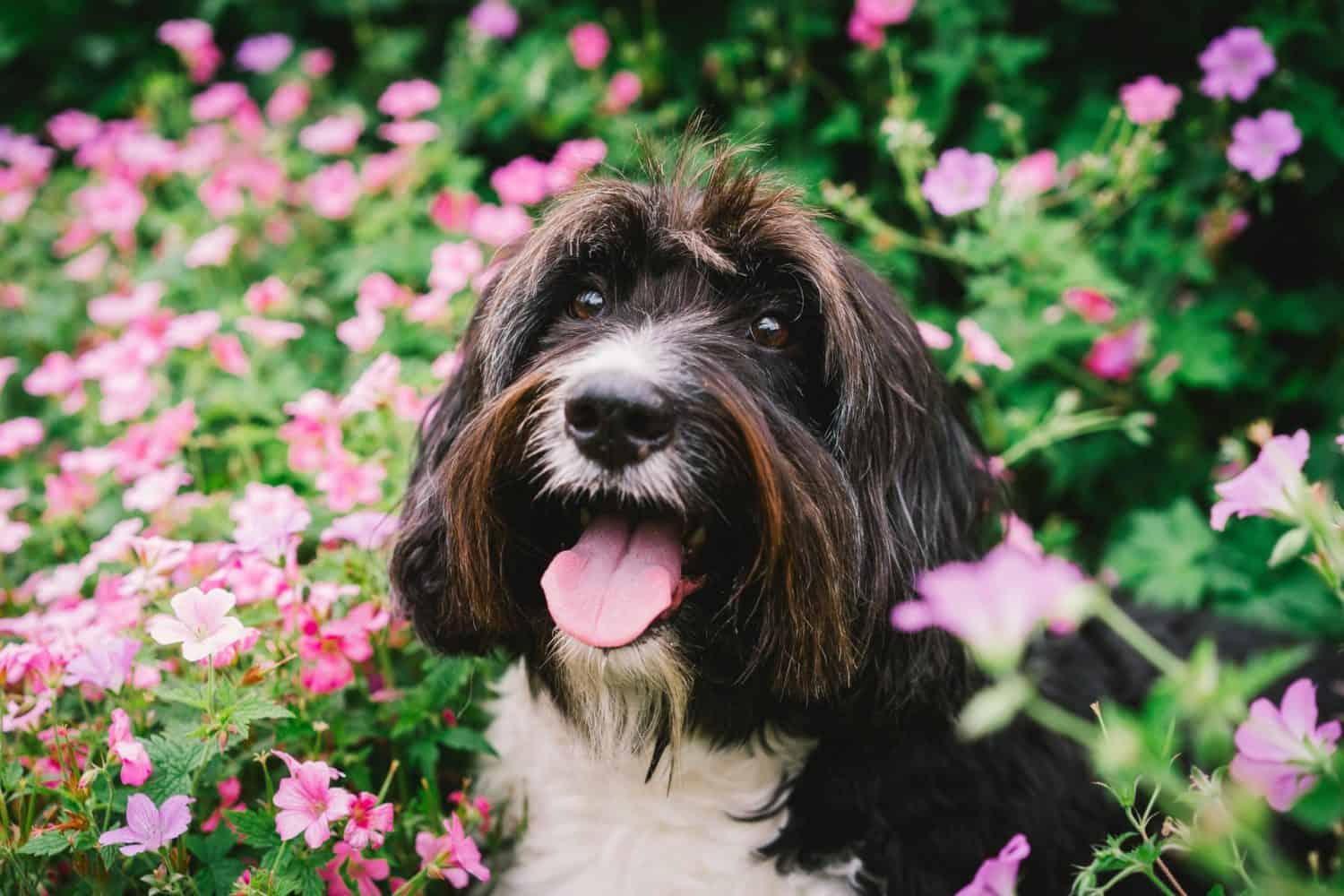 dog surrounded by pink flowers